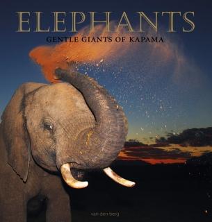 Elephants - Gentle Giants of Kapama