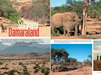 Namibia's desert elephants