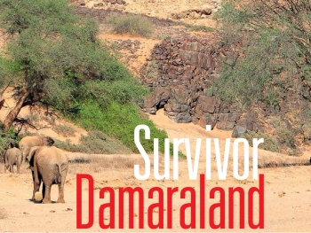 Survivor Damaraland