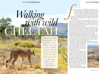 Walking With wild cheetah