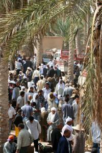 Douz camel market