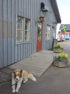 Greenlander dog
