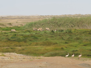 Spring with flamingoes and gemsbok
