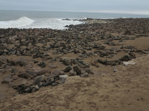 Wall to wall seals at Cape Cross